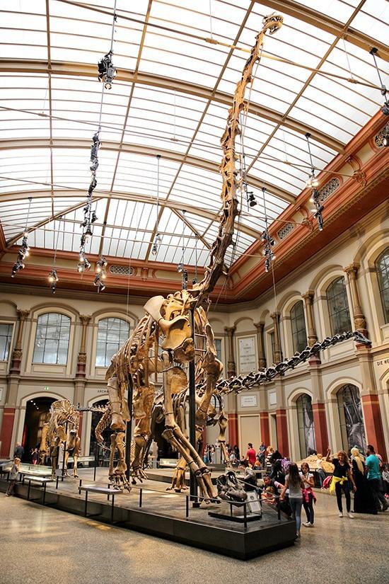 Het grootste dinosaurusskelet ter wereld is dat van de Brachiosaurus brancai in het Museum für Naturkunde in Berlijn