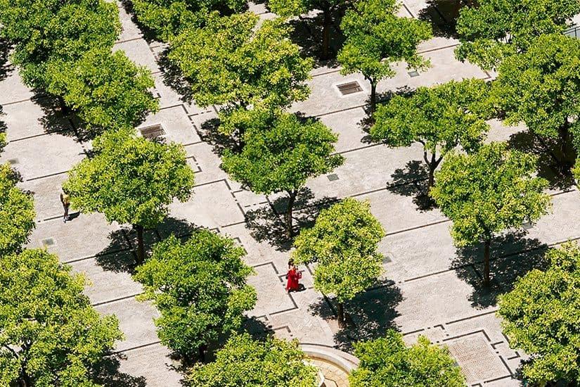 Citytrip Sevilla Bezienswaardigheden - Patio de los Naranjos - door AGMJ